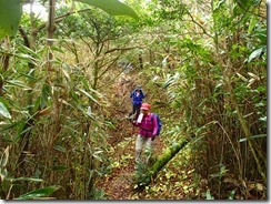 19大箆柄岳を下山します、箆柄はササタケのこと、笹の中を通過します