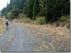 28歩いた林道、整備されていました