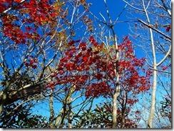 24紅葉がきれい