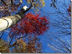 28自然林と紅葉