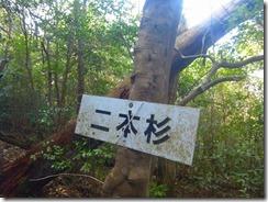 1-21二本杉