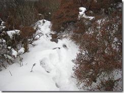 14雪は膝まで積雪