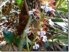 57下山口にあったランの花