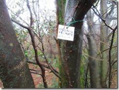 12 羽金山のこんな標識がありました