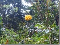 11高山植物