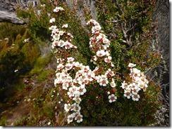 46高山植物