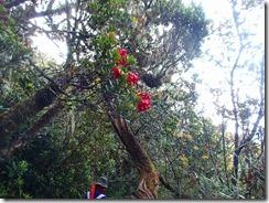 48高山植物