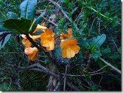 47高山植物
