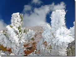 10綺麗な霧氷