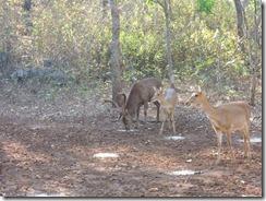 2-33鹿の餌付け