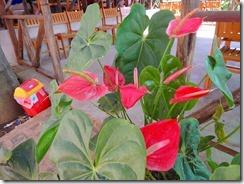 2-26植栽された花