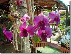2-25植栽された花
