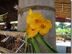 2-27植栽された花