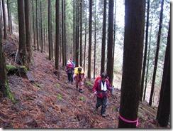 07植林帯の登山道