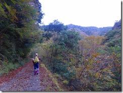 03林道歩き