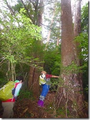 08巨木の中を歩きますP1100395