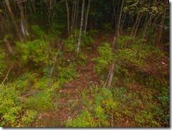 23最初の林道に下山