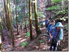 07 人工林の中の登り