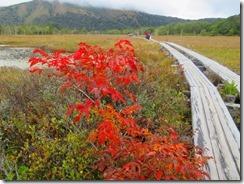 19赤い葉が美しい