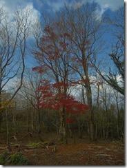 1-07縦走路の紅葉、イマイチかな