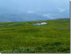 25 姥ヶ岳山頂はお花畑になっている