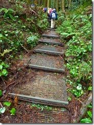 04整備された登山道
