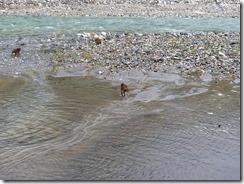 5-03猿が川の中にいます