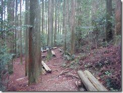 2-08分岐を左(西)に行縢山へ向かいます