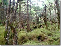 4-02苔の森を抜けますP9132804