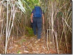 1-21再び笹林の歩きにくい登山道を進みます