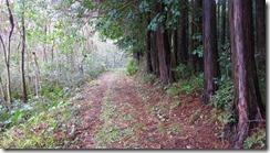 2-03しばらく歩きやすい登山道