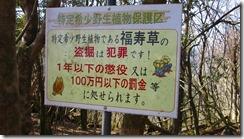 13福寿草群生地に行きました