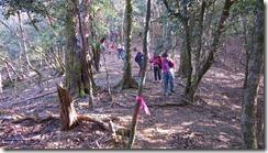 30林道から再び往路の登山道に入ります。ピンクテープが設置されています