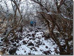 2-12大戸越への縦走路、雪で逆に歩きやすいのかな?