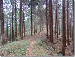 03植林帯の平坦な登山道PB010055