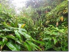 1-12背丈ほどの笹や草の中を進みます、まるで藪漕ぎ登山です
