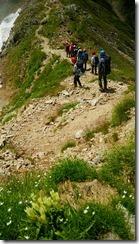 014登山道にトウヤクリンドウ