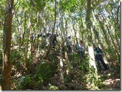 2-05往路を引き返します。自然林の中の木漏れ日がきれいです