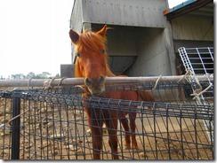 38牧場の愛らしい馬