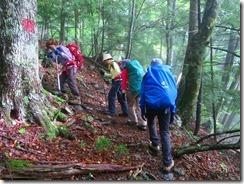2-08樹林帯を登って行きます