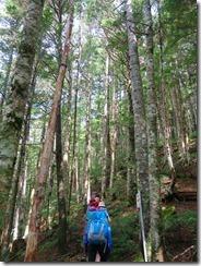 2-12シラビソ林を登ります