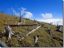 2-21階段途中にも立枯れ木