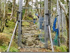 2-17オオヤマレンゲの群生地にはシカ除けの柵