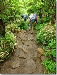 09扇ケ鼻分岐手前は石が埋められて歩きやすくなっています