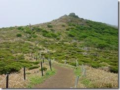 26扇ヶ鼻までの登山道、ミヤマキリシマが咲いていません。花芽があるので今週末かな?