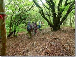 33下山道は自然林の中を歩きます