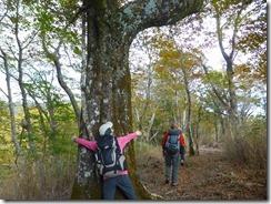 1-04Pブナの巨木
