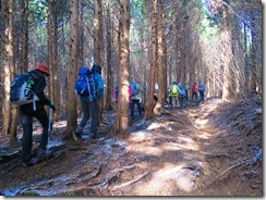 1-07植林帯の登山道