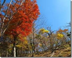 07紅葉が綺麗