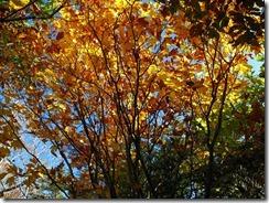07黄葉も綺麗